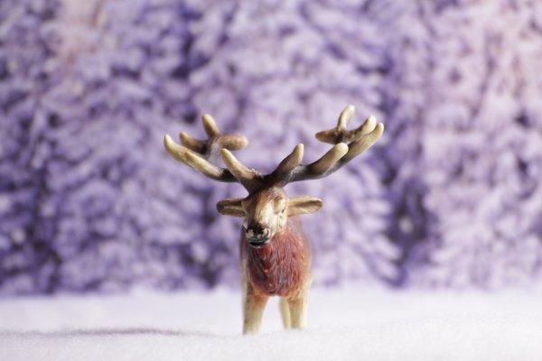 Douce neige ♫♪ (1)  [20/12/16]