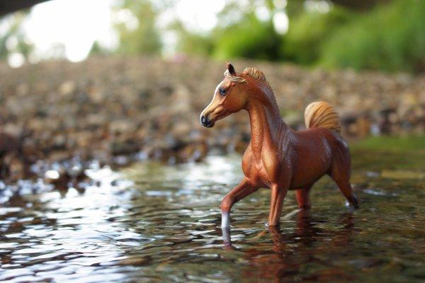 La largue et les chevaux.