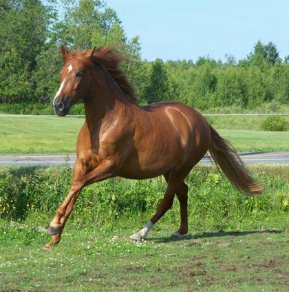 Un cheval, un cavalier : une histoire