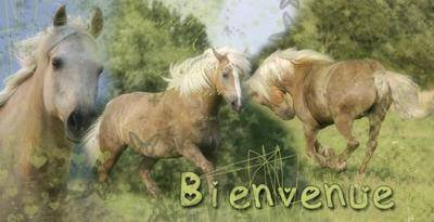 Bienvenue sur Xx-Dream-of-Horse-xX