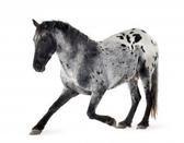 Bienvenue sur Xx-Dream-of-Horse-xX