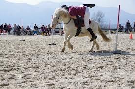 Quelques épreuves du pony games
