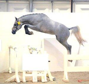 L'Équitation...