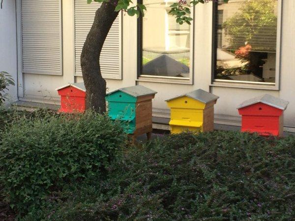 Des ruches attaquées à l'insecticide, à Rouen : des dizaines de milliers d'abeilles décimées