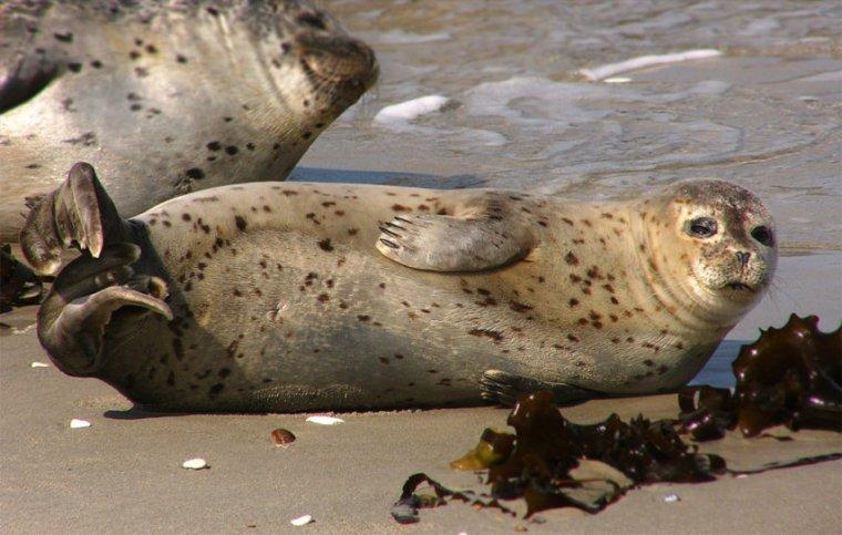 Requin, cachalot, tortue, phoque… Ces incroyables animaux marins que l'on peut croiser en Normandie