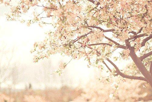 Fanfiction n°1 Fausse Paix - Chapitre 1 : L'aube d'un printemps déchu
