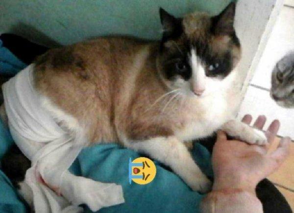 Partager s'il vous plaît pour aider Little-moon (mon chat)