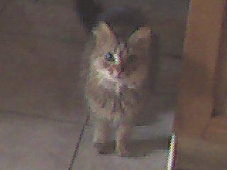 mon  chat caramelle