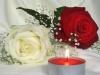 la ros blanche couleur de l'Espoir et la rose rouge couleur de l'Amour