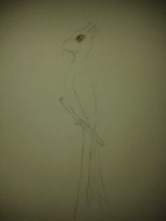Petit dessin d'un oiseau