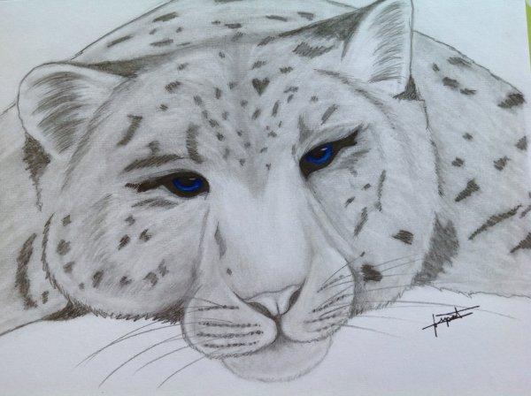 Dessin léopard des neiges ♥