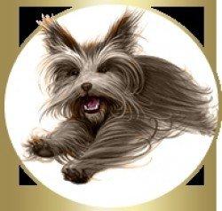 Mon livre préféré :Le clan des chiens Tome 1 de Christopher Holt.