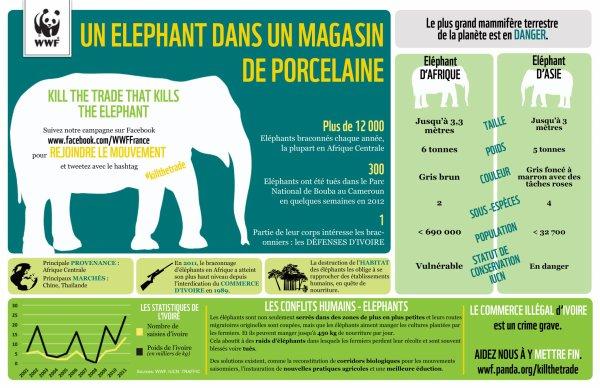 Le trafic d'ivoire