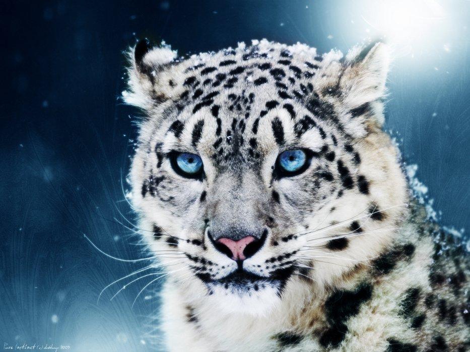 Species-of-animal