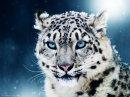 Photo de Species-of-animal