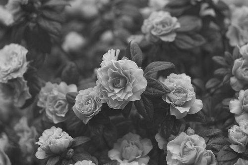 • Si j'étais une abeille et toi une fleur, j'irai butiner ton coeur ♥