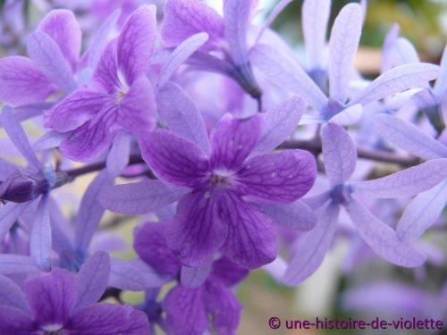 . . Bienvenue dans l'univers de Marjorie et Nathan... . _______________________...là où chaque plante qui nait grandit toujours, _______________________________afin de devenir une grande et belle fleur. >--------------------------------------------------------------------------------< © une-histoire-de-violette