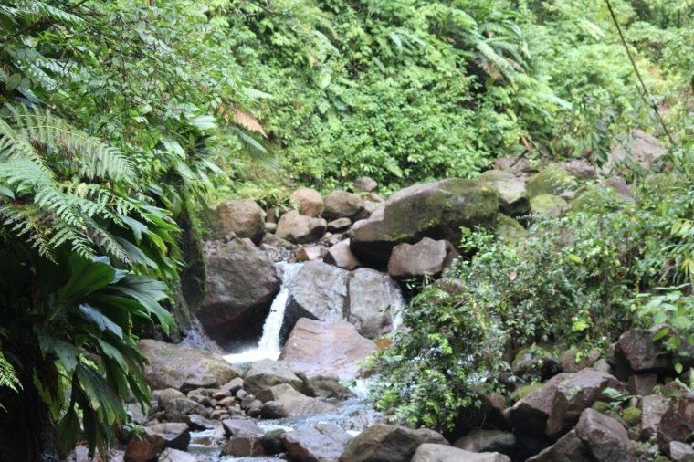 chute du carbet; faune et flore