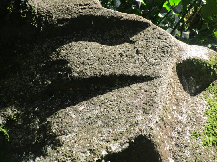 parc archéologique des roches gravées trois rivière; faune et flore