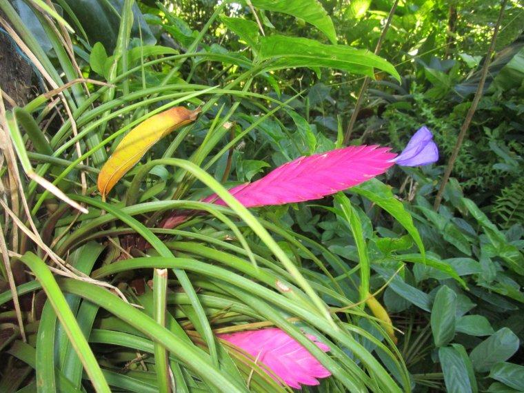 jardin botanique de Deshaies ex propriété de Coluche