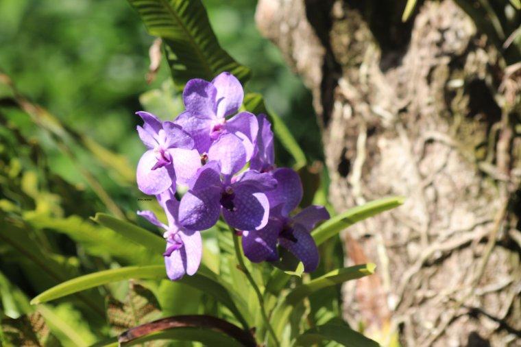 jardin botanique de Deshaies ex propriété de Coluche,