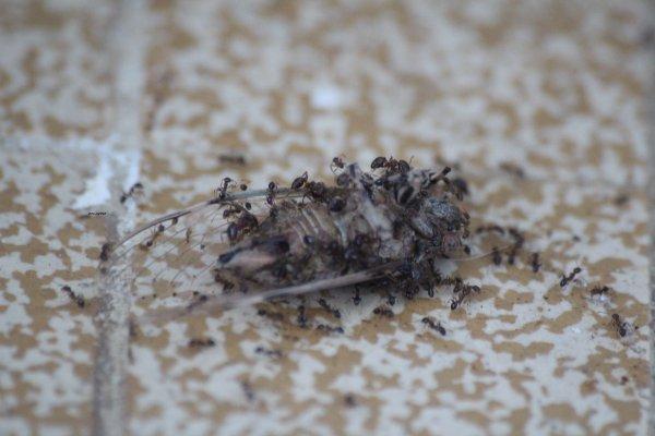 histoire de cigale et de fourmis