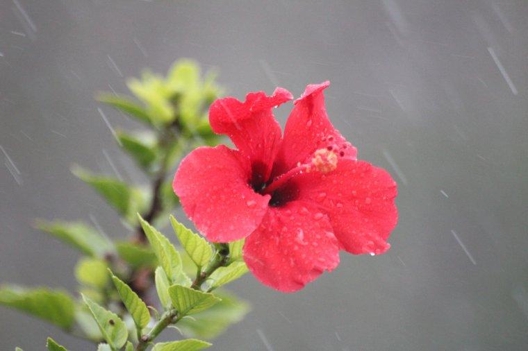 Enfin, la pluie