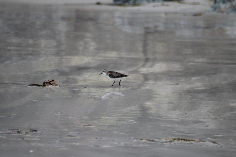 la faune , après le passage de l'ouragan Maria