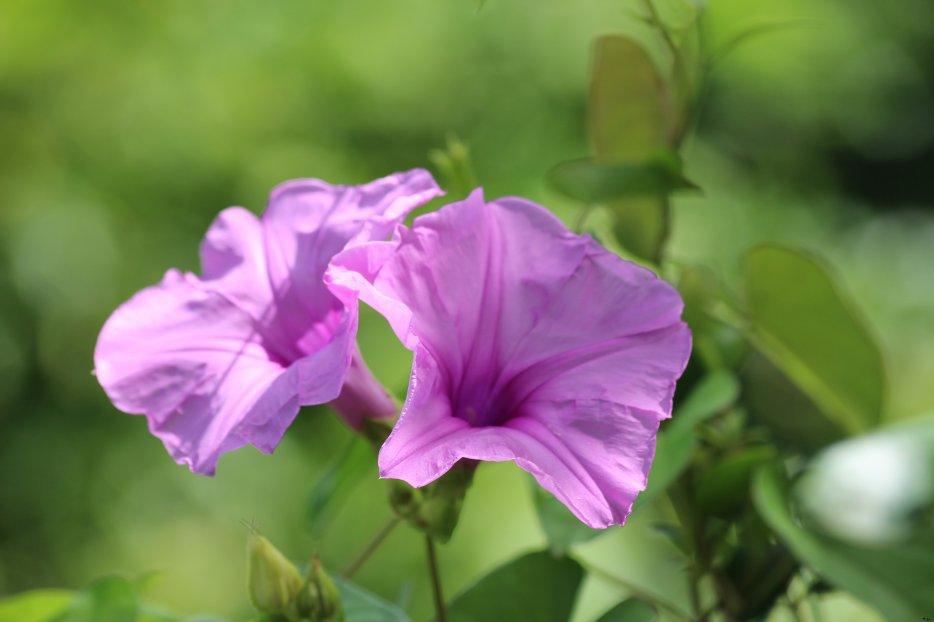 flores et faunes : paysage de la caraïbes