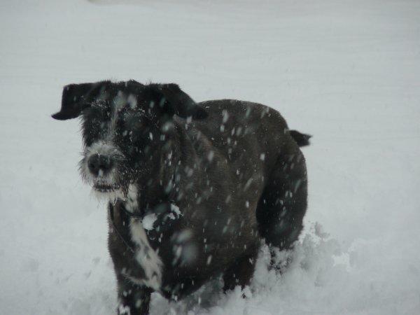 Un barbu dans la neige