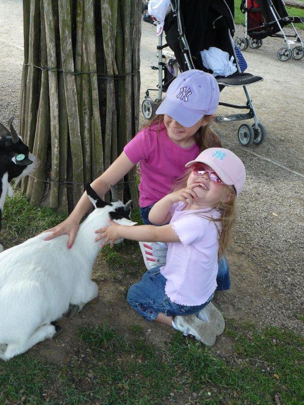 Pairi Daiza : les animaux
