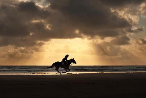 """""""L'extérieur du cheval exerce une influence bénéfique sur l'intérieur de l'homme."""""""