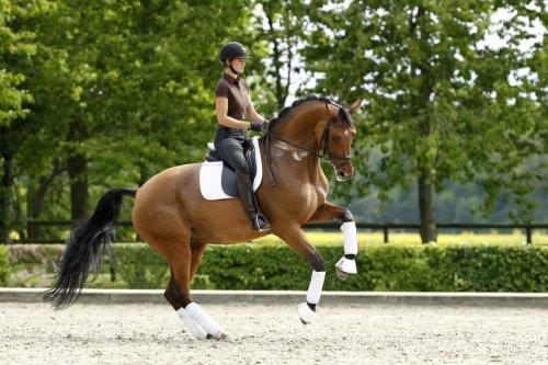 Si les chevaux nous portent c'est qu'ils sont gentils. Ils ont la gentillesse de nous supporter.
