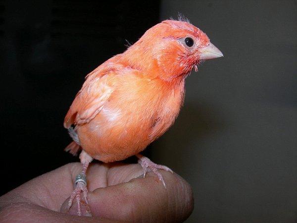 Rojos 2009