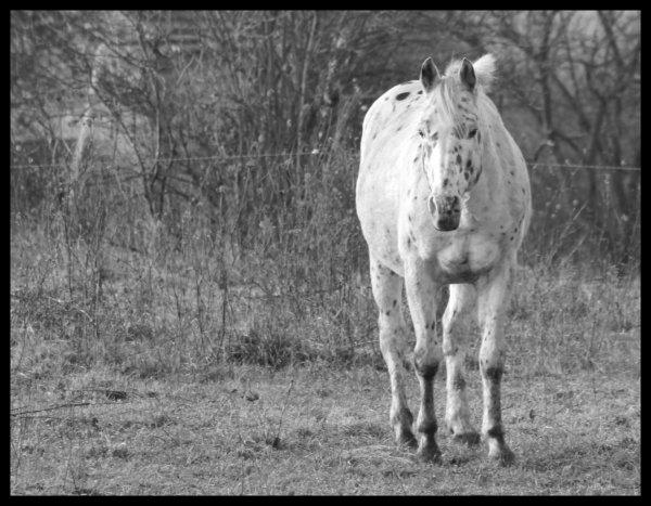 """"""" Ce ne sont pas les chevaux qui sont le reflets du cavaliers, mais bien les cavaliers qui sont le reflets de leur chevaux """""""