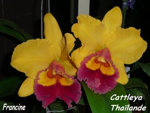 Diaporama papillons et orchidées