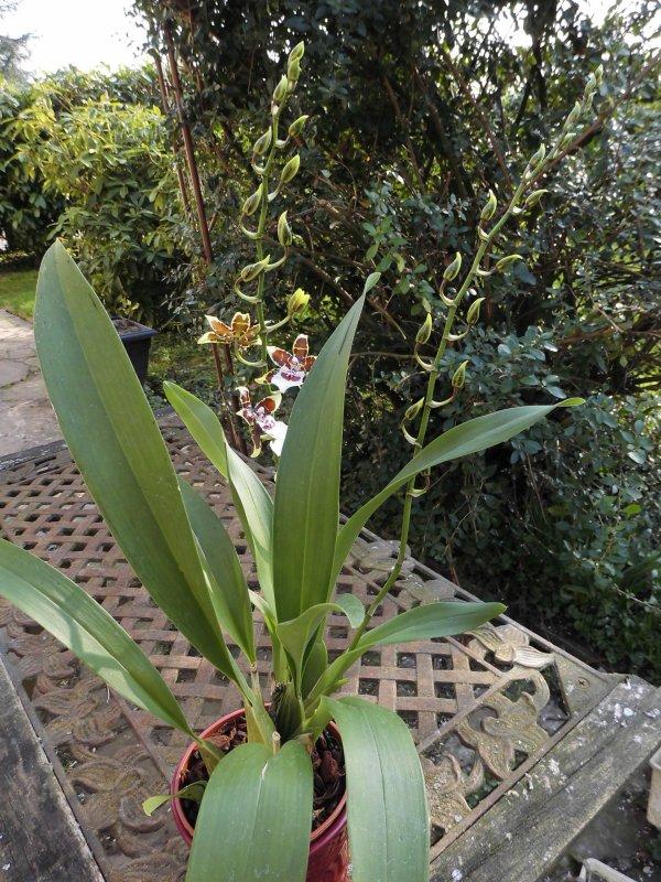Ce we exposition d'orchidées