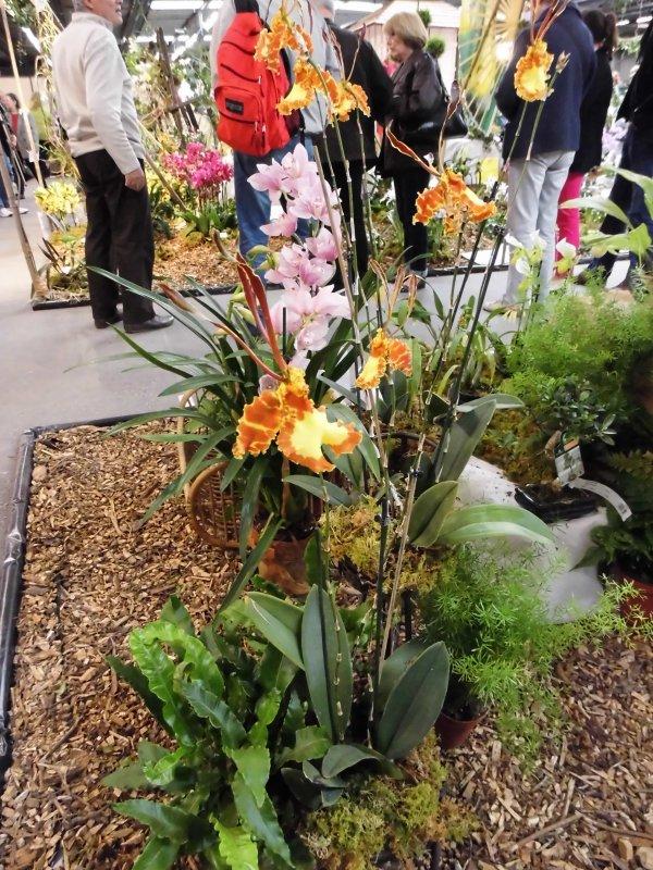 Salon des orchidées: 10 ans de la FFAO: ambiance