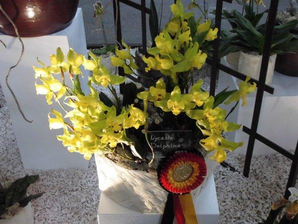 Orchidées 10 ans FFAO, suite et fin