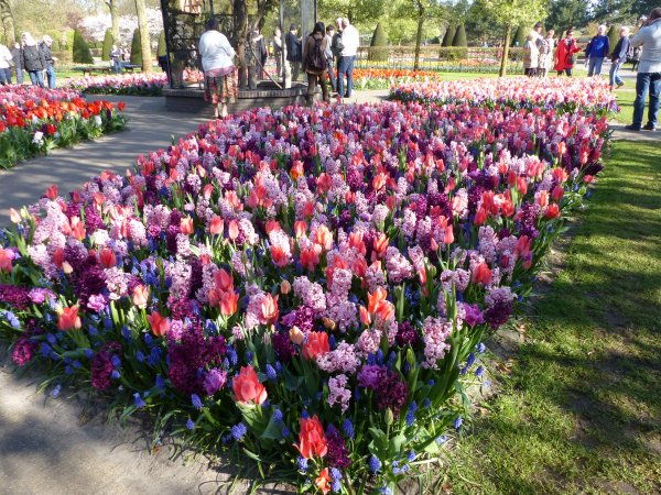 Hollande :  Parc Keukenhof : jacinthes, narcisses...