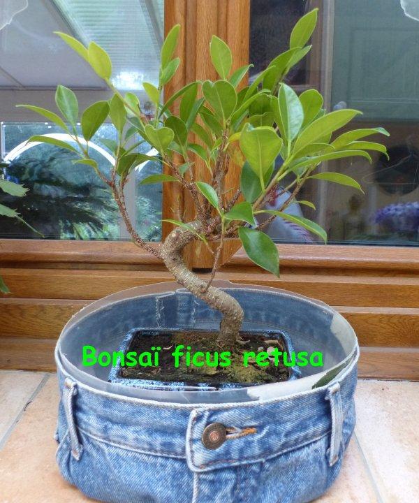 Les petites plantes du moment