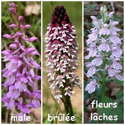 Orchidées en broderie