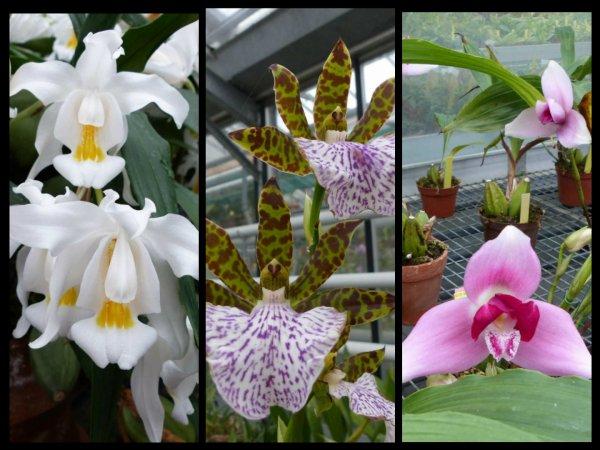 Orchidées des serres du Sénat
