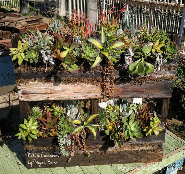 """Ikebana"" de succulentes..."
