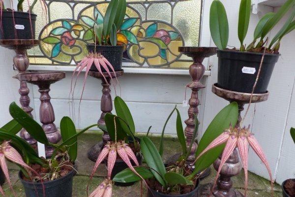 Visite des serres d'orchidées Petrens en Belgique