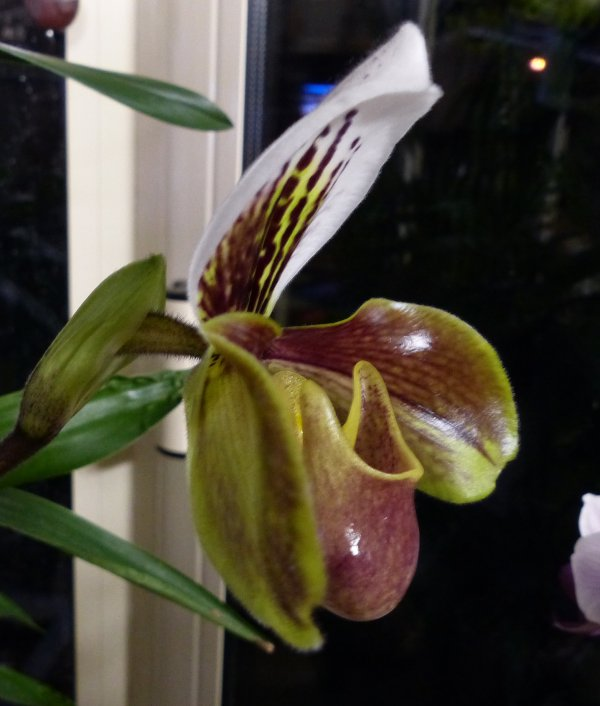 Et encore une orchidée