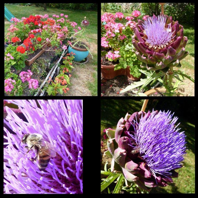 Belle fleur d'artichaut