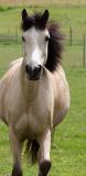 Photo de horses-story-love