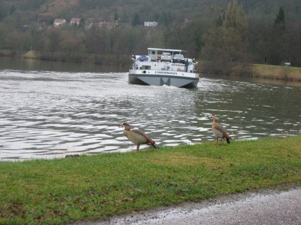 La boucle de la Moselle  à Liverdun.
