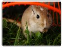 Photo de x-MonHamster